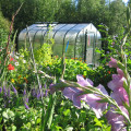 hoop greenhouse